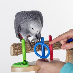Papoušci a ostatní